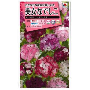 花の種 美女なでしこ[カレイドスコープミックス] 0.1ml(メール便可能)|vg-harada