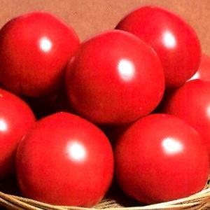 野菜の種/種子 パルト・トマト 100粒(メール便可能/大袋)サカタのタネ 種苗|vg-harada