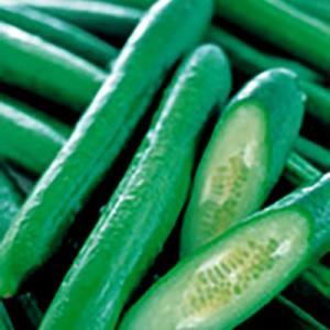 野菜の種/種子 フリーダム・キュウリ 350粒 (メール便可能/大袋)サカタのタネ|vg-harada