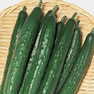 野菜の種/種子 よしなり・キュウリ 350粒(メール便可能/大袋)サカタのタネ 種苗|vg-harada