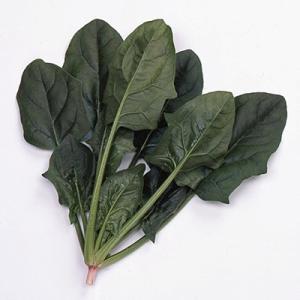 野菜の種/種子 オシリス・ほうれんそう M・3万粒  (大袋)サカタのタネ|vg-harada