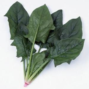 野菜の種/種子 アグレッシブ・ほうれんそう M・3万粒  (大袋)サカタのタネ|vg-harada
