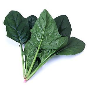 野菜の種/種子 クロノス・ほうれんそう L・2万粒  (大袋)サカタのタネ|vg-harada