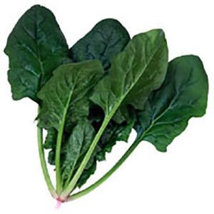野菜の種/種子 トラッド7・ほうれんそう L・2万粒  (大袋)サカタのタネ|vg-harada