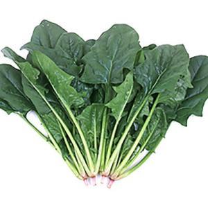 野菜の種/種子 ミラージュ・ほうれんそう L・2万粒(大袋)サカタのタネ|vg-harada