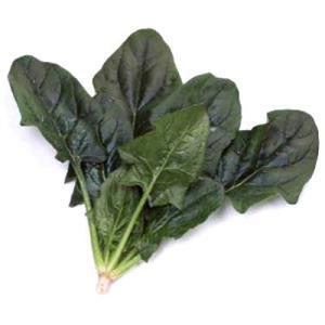 野菜の種/種子 プログレス・ほうれんそう M・3万粒(大袋)サカタのタネ|vg-harada