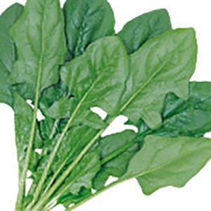 野菜の種/種子 まほろば・ほうれんそう M・3万粒(大袋)サカタのタネ|vg-harada
