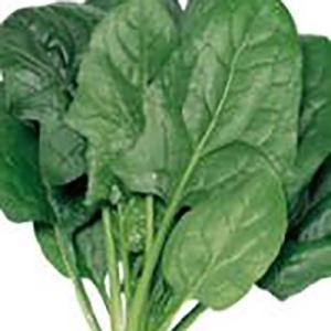 野菜の種/種子 ブライトン・ほうれんそう M・3万粒(大袋)サカタのタネ|vg-harada