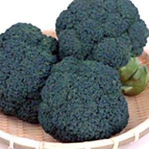 野菜の種/種子 おはよう ブロッコリー 2000粒(大袋)サカタのタネ 種苗 (メール便発送)|vg-harada