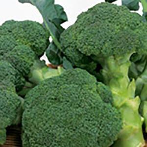 野菜の種/種子 ピクセル ブロッコリー 2000粒(メール便発送/大袋)サカタのタネ 種苗|vg-harada