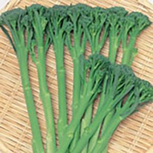 野菜の種/種子 スティックセニョール・茎ブロッコリー 10ml(メール便発送)サカタのタネ 種苗|vg-harada