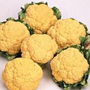 野菜の種/種子 オレンジ美星 カリフラワー 2000粒(大袋)サカタのタネ|vg-harada