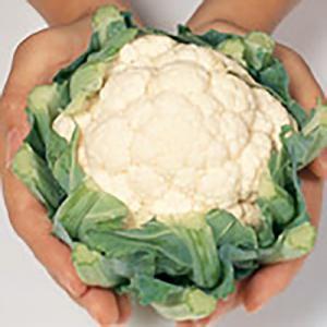 野菜の種/種子 美星 カリフラワー 2000粒(大袋)サカタのタネ 種苗|vg-harada