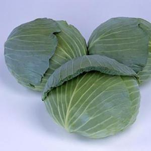 野菜の種/種子 青琳 キャベツ 2000粒(大袋)サカタのタネ|vg-harada