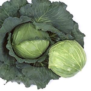 野菜の種/種子 藍天 キャベツ スイートらら ペレット5000粒(大袋)サカタのタネ|vg-harada