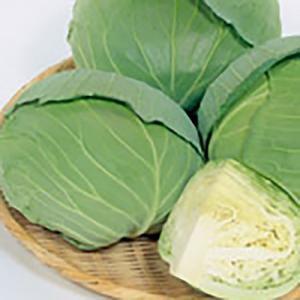 野菜の種/種子 新藍 キャベツ スイートらら 2000粒(大袋)サカタのタネ 種苗|vg-harada