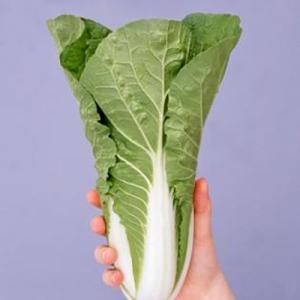 野菜の種/種子 タイニーシュシュ ゆめいろハクサイ 20ml(メール便可能/大袋)サカタのタネ|vg-harada