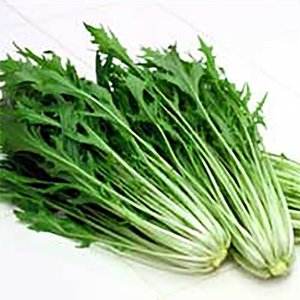 野菜の種/種子 早生水天 水菜 20ml(メール便発送)サカタのタネ 種苗|vg-harada
