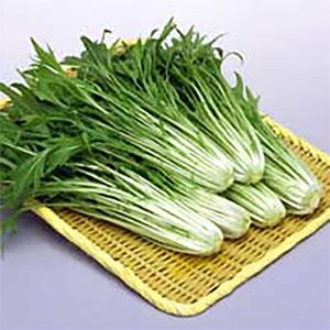 野菜の種/種子 水天 水菜 20ml(メール便可能)サカタのタネ|vg-harada