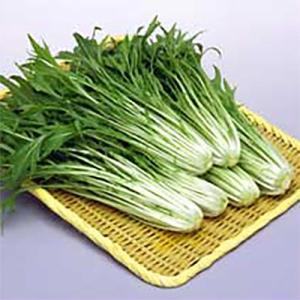 野菜の種/種子 水天 水菜 2dl(大袋)サカタのタネ 種苗|vg-harada