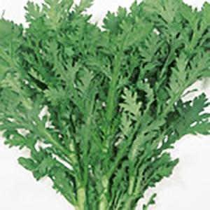 野菜の種/種子 さとゆたか 春菊・シュンギク 1L(大袋)サカタのタネ|vg-harada