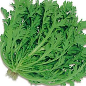野菜の種/種子 さとにしき 春菊・シュンギク 1L(大袋)サカタのタネ|vg-harada