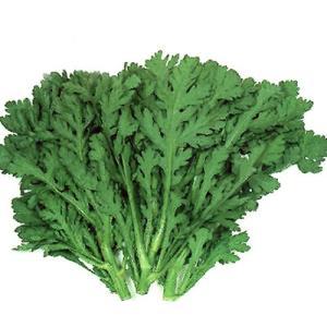 野菜の種/種子 さとあきら 春菊・シュンギク 2dl(大袋)サカタのタネ|vg-harada
