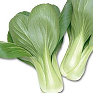 野菜の種/種子 青帝 チンゲンサイ 2dl(大袋)サカタのタネ|vg-harada
