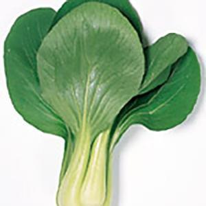 耐病性、耐暑耐寒性に強くつくりやすいです。そろいよく、上物率、収量性にすぐれます。葉は濃緑で光沢があ...
