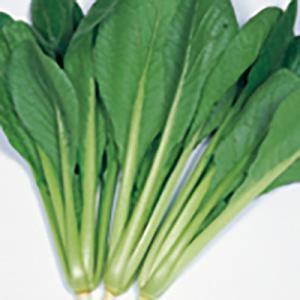 野菜の種/種子 いなむら コマツナ 2dl(大袋)サカタのタネ 種苗|vg-harada