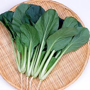 生育はゆるやかな中生品種で、耐暑性、耐寒性にすぐれ、周年栽培が可能です。草姿は極立性で、葉色は濃緑で...