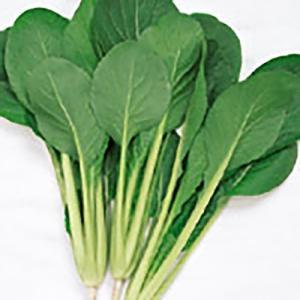 野菜の種/種子 なかまち コマツナ 2dl(大袋)サカタのタネ|vg-harada