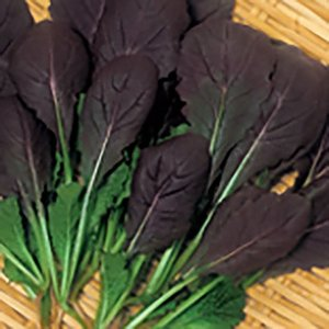野菜の種/種子 ベビーサラダ レッドマスタード 20ml(メール便可能)サカタのタネ|vg-harada