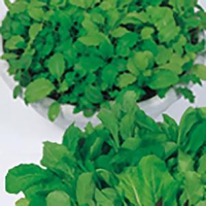 野菜の種/種子 ベビーサラダ ミックス 20ml(メール便発送)サカタのタネ 種苗|vg-harada