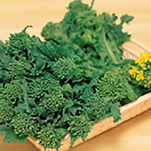 野菜の種/種子 花飾り ハナナ 20ml(メール便可能)サカタのタネ|vg-harada