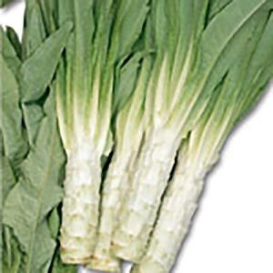 野菜の種/種子 やまくらげ ケルン 茎レタス 10ml(メール便発送)サカタのタネ 種苗|vg-harada