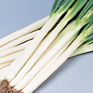 野菜の種/種子 夏扇4号 ねぎ 20ml(メール便可能)サカタのタネ|vg-harada