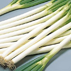 野菜の種/種子 夏扇3号 ねぎ 20ml(メール便可能)サカタのタネ|vg-harada