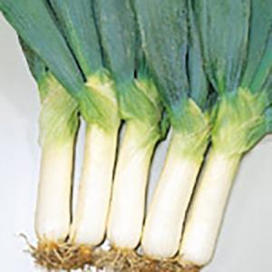 野菜の種/種子 雷帝下仁田 ねぎ 20ml(メール便可能)サカタのタネ 種苗|vg-harada