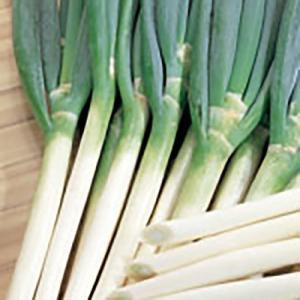 野菜の種/種子 越谷黒一本太 ねぎ 20ml(メール便可能)サカタのタネ|vg-harada