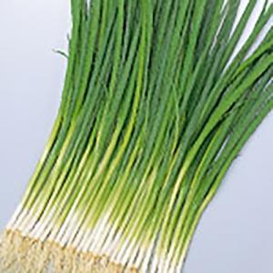 野菜の種/種子 緑秀 小ねぎ 20ml(メール便可能)サカタのタネ|vg-harada