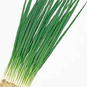野菜の種/種子 剣舞 小ねぎ 20ml(メール便可能)サカタのタネ|vg-harada