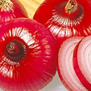 野菜の種/種子 湘南レッド タマネギ 1dl(メール便可能)サカタのタネ|vg-harada