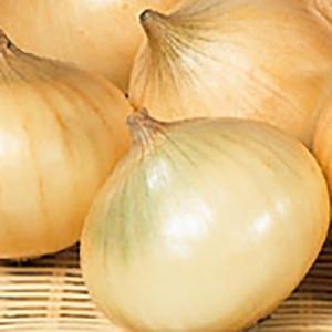野菜の種/種子 スーパーハイゴールド タマネギ 2dl(大袋)サカタのタネ|vg-harada