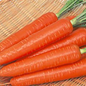 野菜の種/種子 ベーターリッチ ニンジン ペレット1万粒(大袋)サカタのタネ 種苗|vg-harada