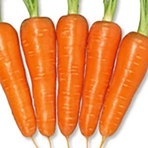 野菜の種/種子 紅あかり ニンジン ペレット1万粒(大袋)サカタのタネ|vg-harada