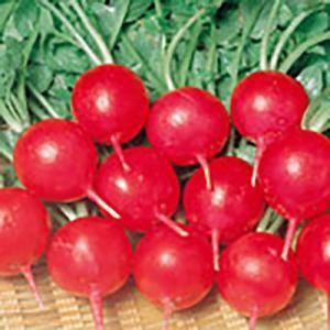 野菜の種/種子 レッドチャイム 二十日大根 2dl(大袋)サカタのタネ vg-harada