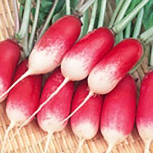 野菜の種/種子 紅白 二十日大根 2dl(大袋)サカタのタネ|vg-harada