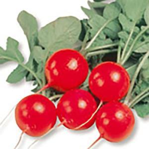 野菜の種/種子 さくらんぼ 二十日大根 2dl(大袋)サカタのタネ 種苗|vg-harada