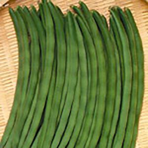 野菜の種/種子 サクサク王子 つるなしいんげん 1dl(メール便可能)サカタのタネ|vg-harada